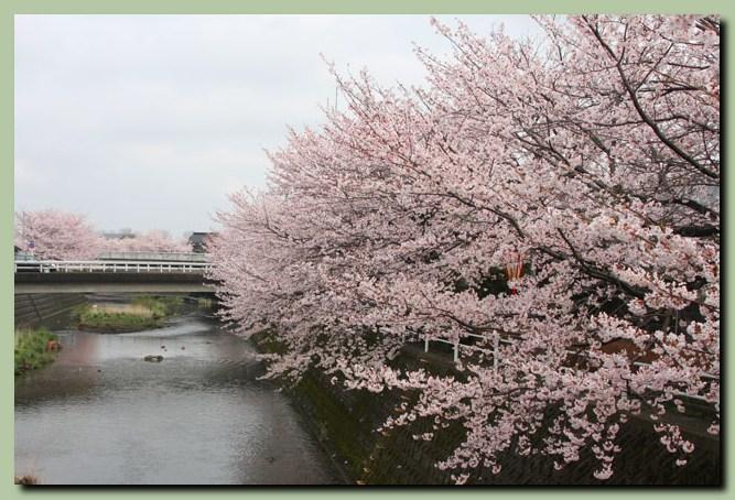 付録:金沢桜スポット5_f0079990_10514070.jpg