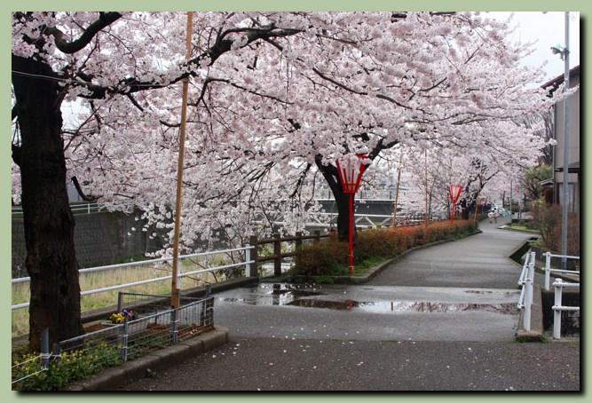 付録:金沢桜スポット5_f0079990_1051473.jpg