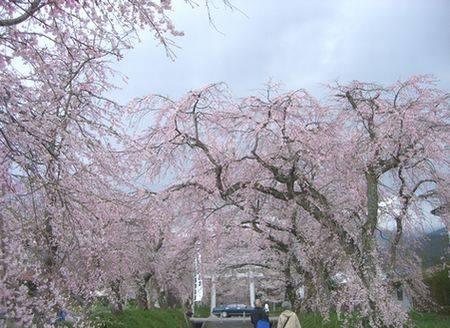 おいでまっせ山口のお花見_e0122219_12105768.jpg