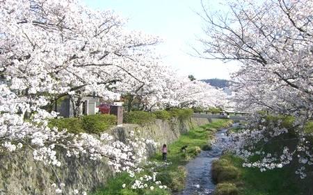 おいでまっせ山口のお花見_e0122219_12155121.jpg