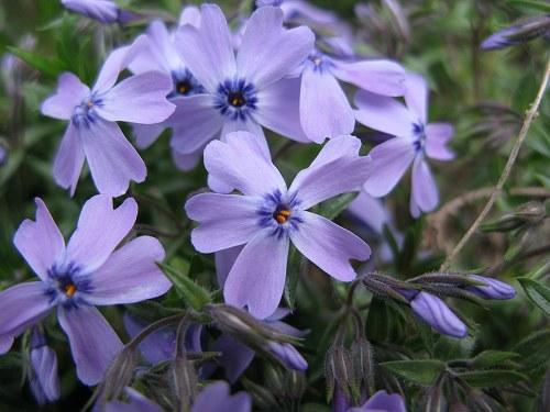 庭で_e0072023_2012313.jpg