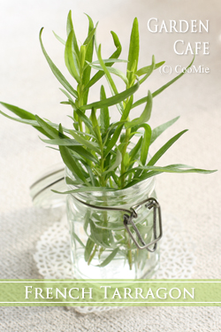 French Tarragon ♪_a0097840_15494075.jpg