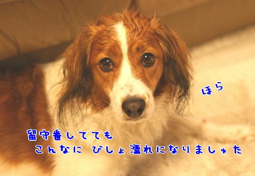 d0013149_651535.jpg