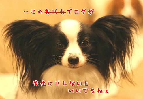 d0013149_814100.jpg