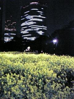 桜に_b0096957_23313750.jpg