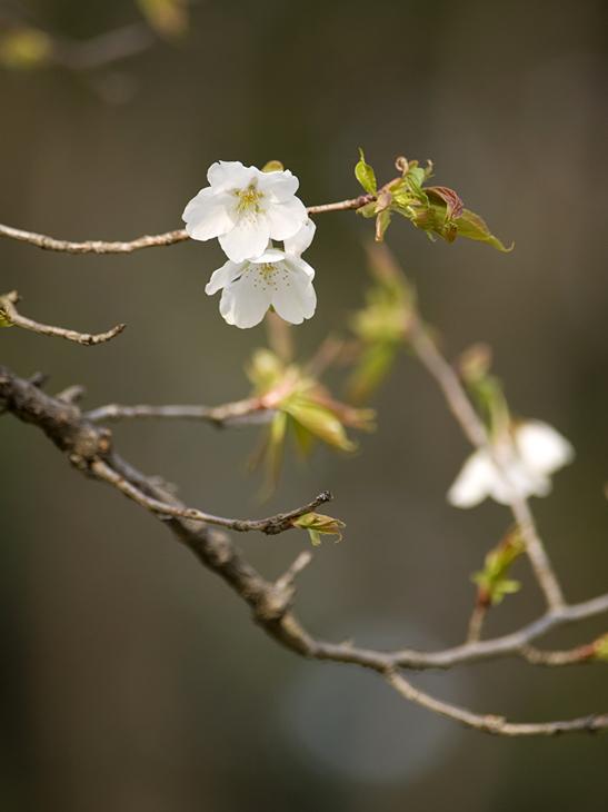 春の嵐_a0100959_23592674.jpg