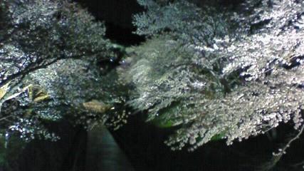 f0116278_2001650.jpg