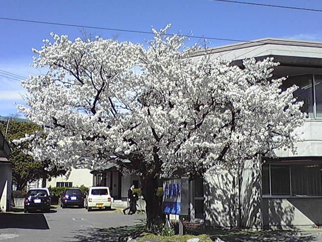 花の季節_e0137684_20575589.jpg