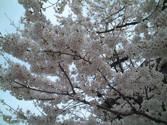 花の季節_e0137684_205774.jpg