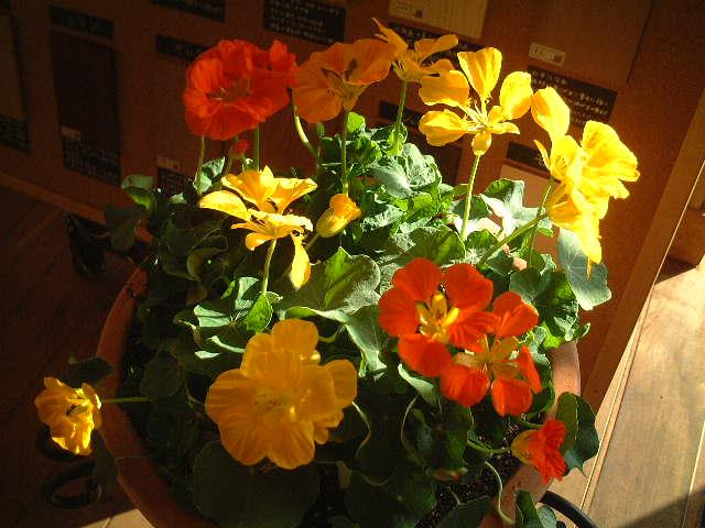 花の季節_e0137684_21194889.jpg