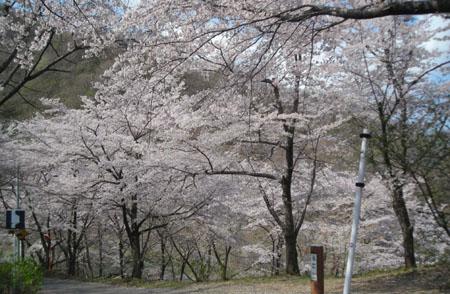 花紀行: 牛伏山桜紀行_d0000995_22121134.jpg