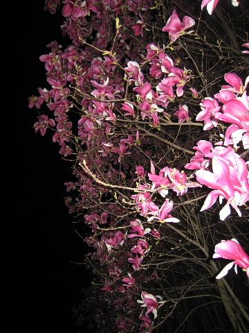 花見シーズンだけども・・・_e0111396_18561495.jpg