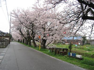 桜並木★_c0113001_21141626.jpg