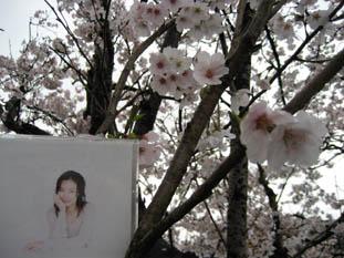 桜並木★_c0113001_2123560.jpg