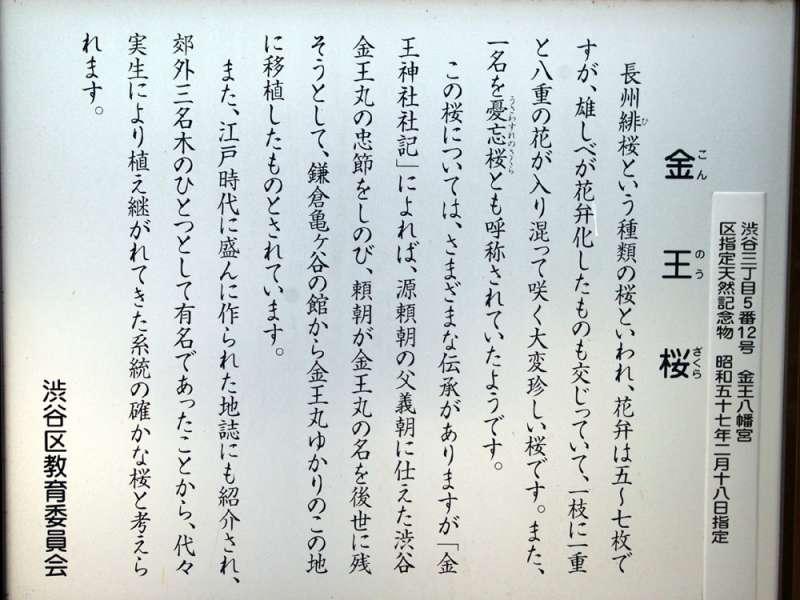 金王桜_c0062832_17465480.jpg