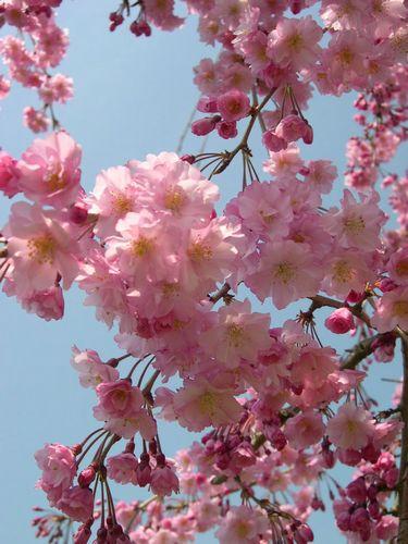 お花見ドライブ~桂川~_b0025947_18482793.jpg