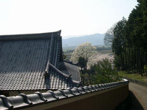 お花見ドライブ~桂川~_b0025947_19193346.jpg