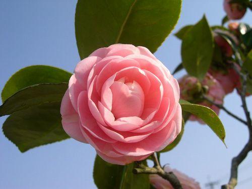 お花見ドライブ~桂川~_b0025947_193246100.jpg