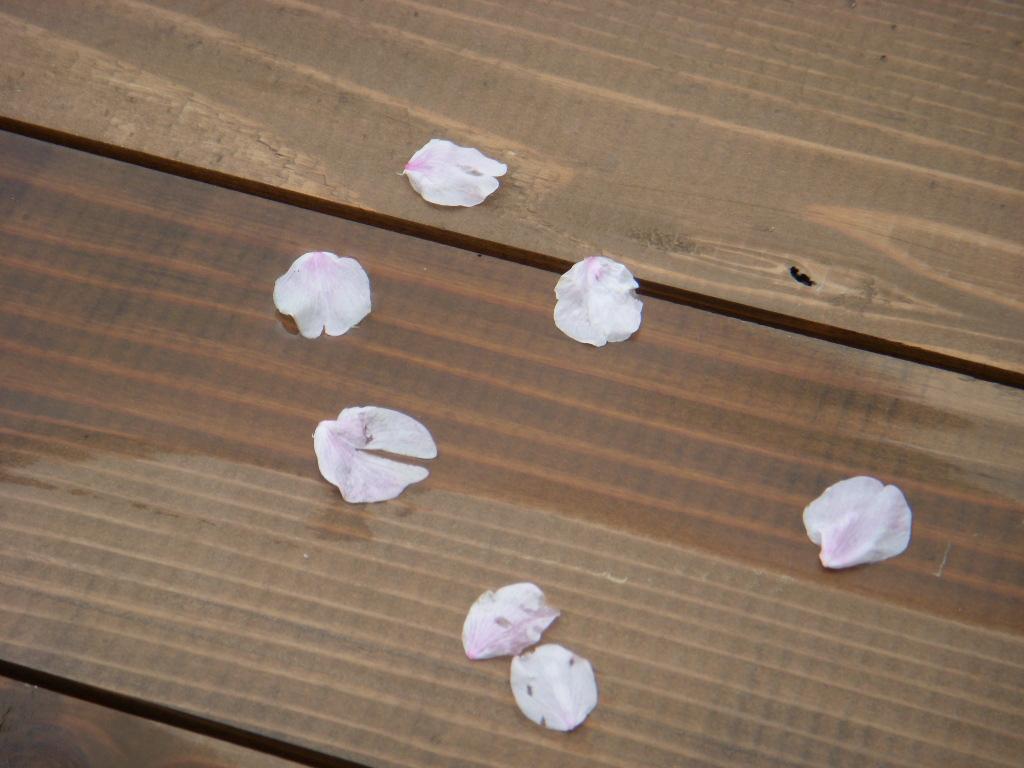 桜チル_c0156749_103995.jpg