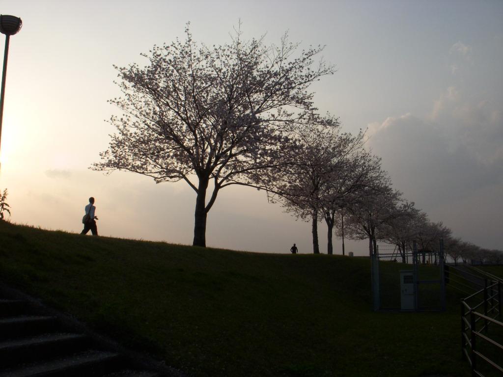 桜チル_c0156749_9282239.jpg