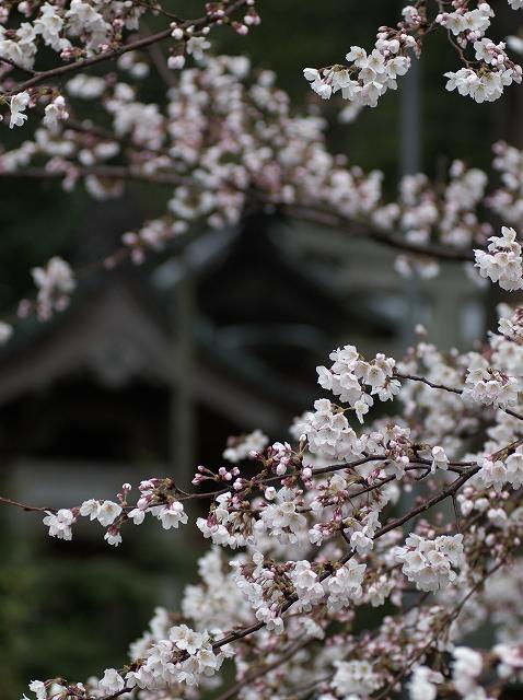 冴返る ~春の高滝駅~_f0018464_6413184.jpg