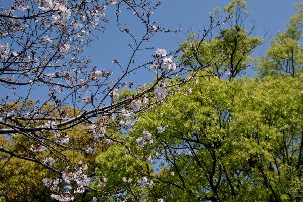 桜はまだ続く_d0030373_21355980.jpg