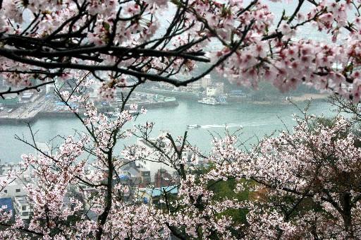 尾道・千光寺公園、桜ごしの海峡 (広島)_b0067283_14144274.jpg