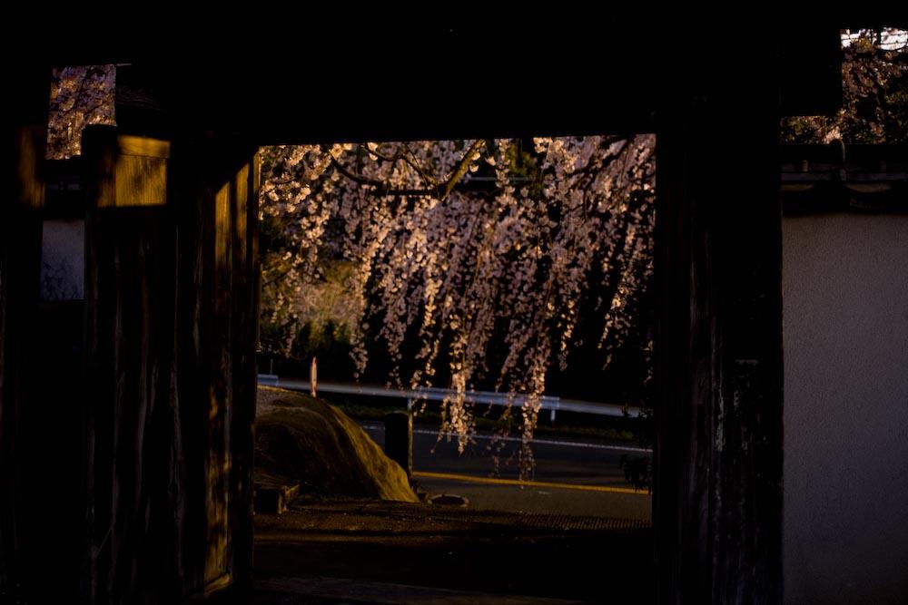枝垂れ桜2_c0150383_23195985.jpg