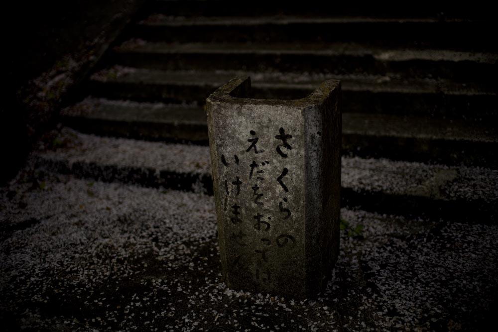 枝垂れ桜2_c0150383_23205234.jpg