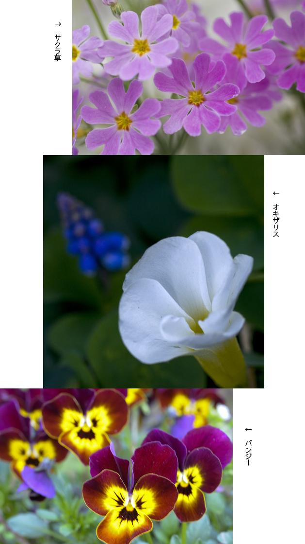 f0093285_1527131.jpg