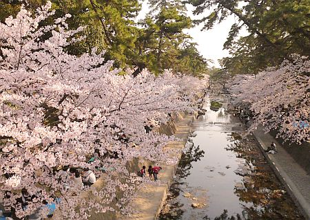 桜祭り&夙川音楽街道~♪_d0078486_0415558.jpg