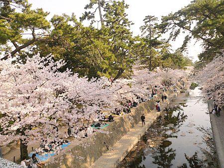 桜祭り&夙川音楽街道~♪_d0078486_044065.jpg