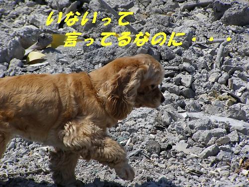 b0067012_2313262.jpg