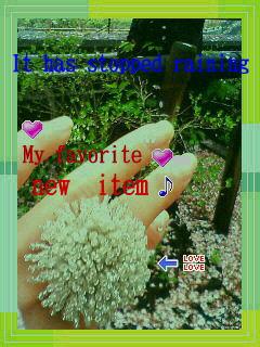 f0107226_8384357.jpg
