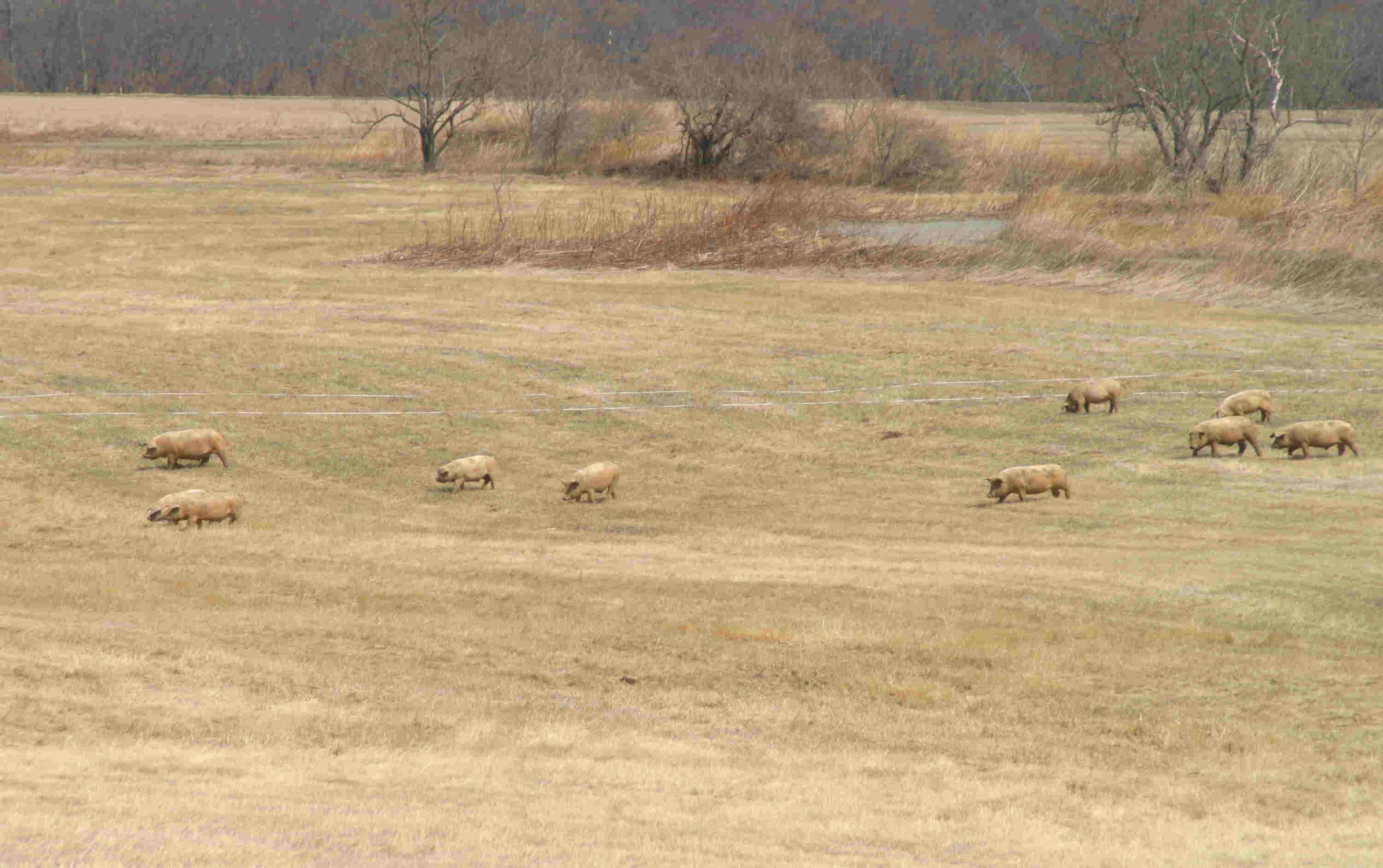 4月10日 河川敷での放牧スタート_a0103738_109089.jpg