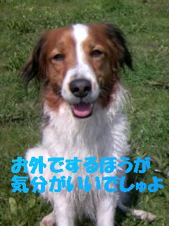 f0080745_1625854.jpg