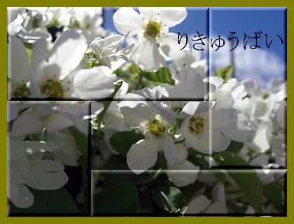 f0031546_15465659.jpg