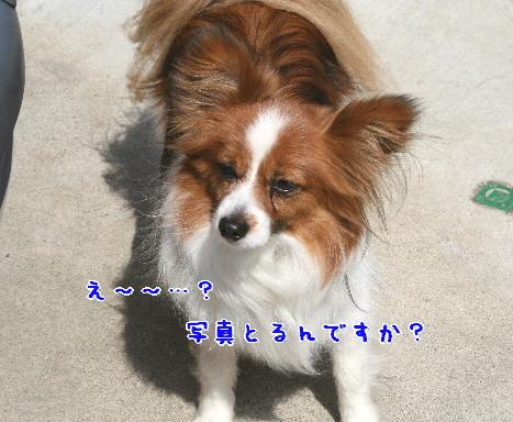 d0013149_74549100.jpg