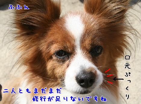 d0013149_822457.jpg
