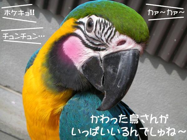 f0132055_985025.jpg