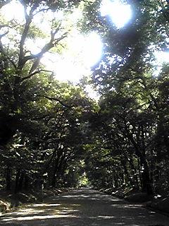 原宿の森_f0146268_156385.jpg