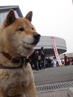桃源郷マラソン ~ 松野町 ~_e0012580_161739.jpg