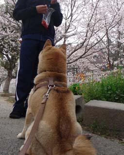 桃源郷マラソン ~ 松野町 ~_e0012580_1622479.jpg