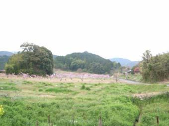 桃源郷マラソン ~ 松野町 ~_e0012580_1633088.jpg