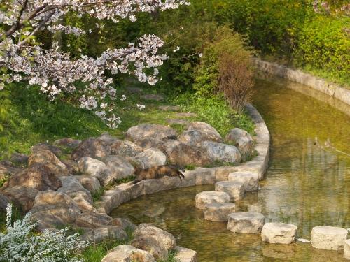 桜猫 その3&猫ふん6告知_c0136217_320595.jpg