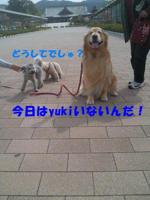 b0127531_1129115.jpg