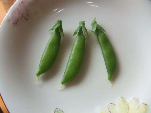 収穫♪_e0147339_14581271.jpg