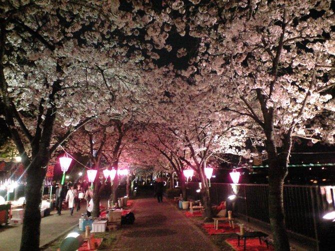 大阪城とサクラ_c0154941_21464820.jpg