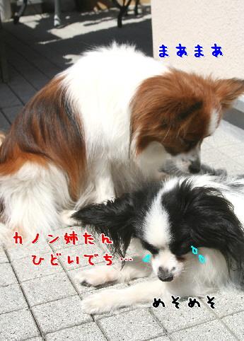 d0013149_91075.jpg