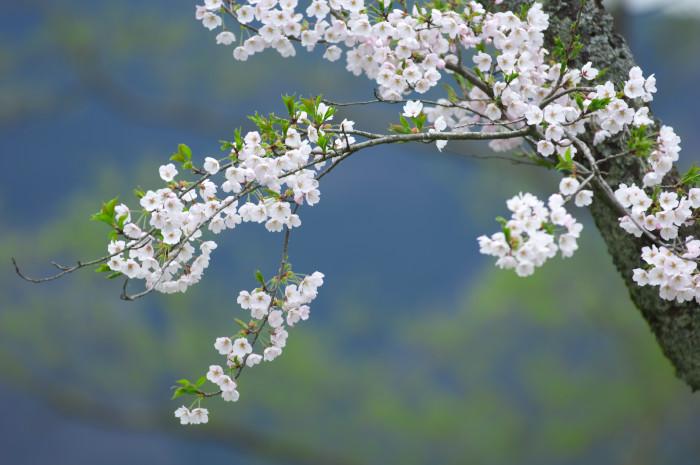 湖北巡櫻_e0056449_21594891.jpg